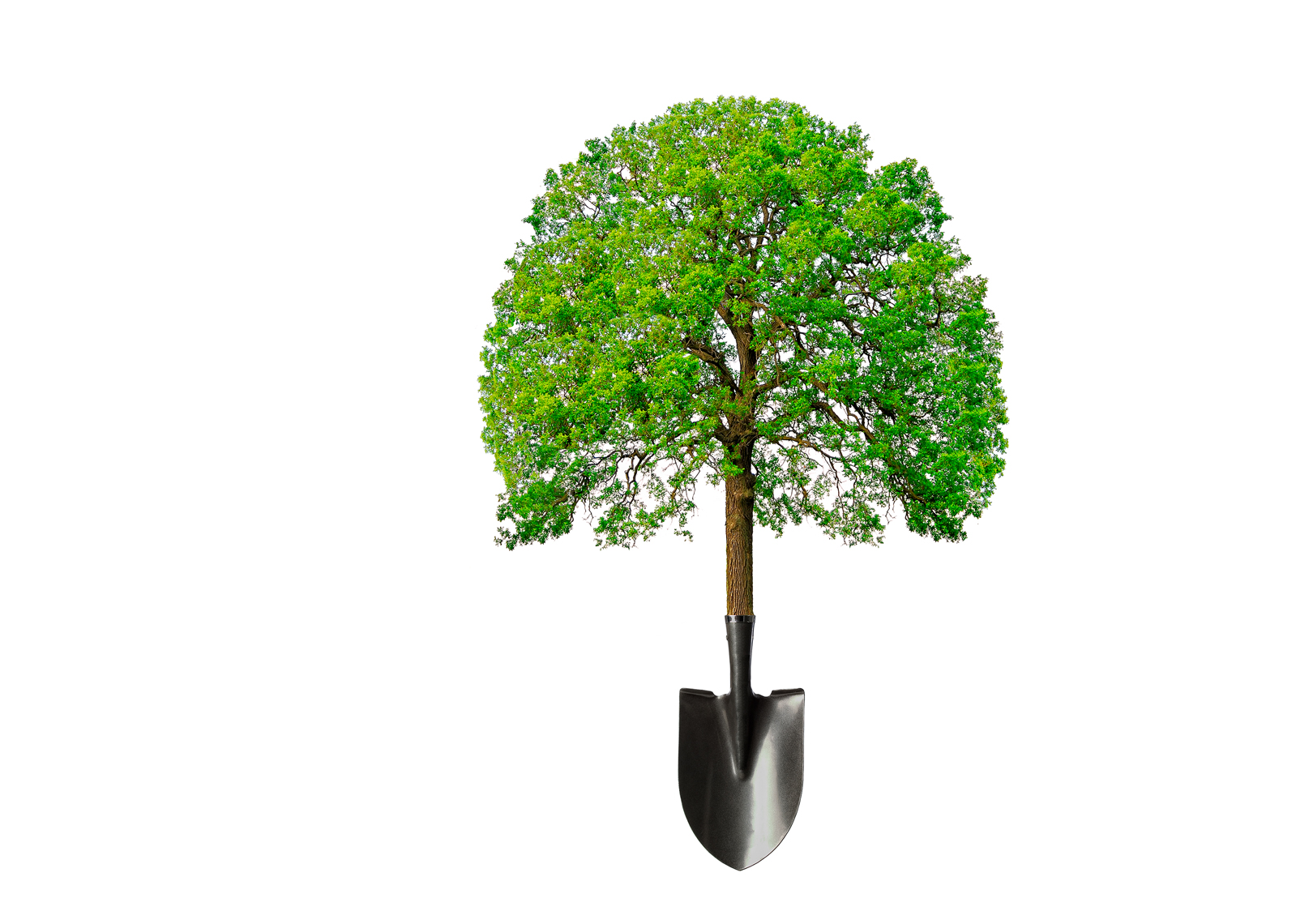 Tree-Shovel